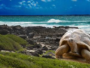 Get up Close with Nature on the Galapagos Islands
